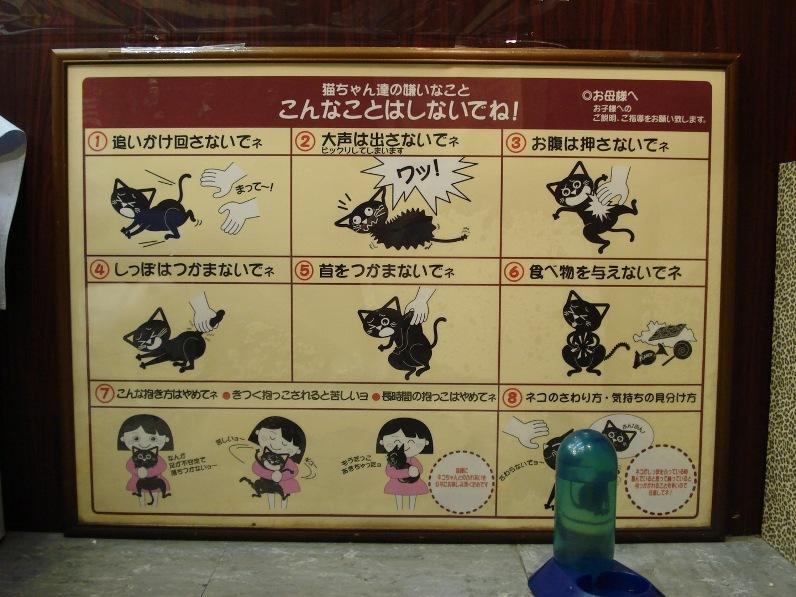 Инструкция в Некобукуро об обращении с котами. Фото