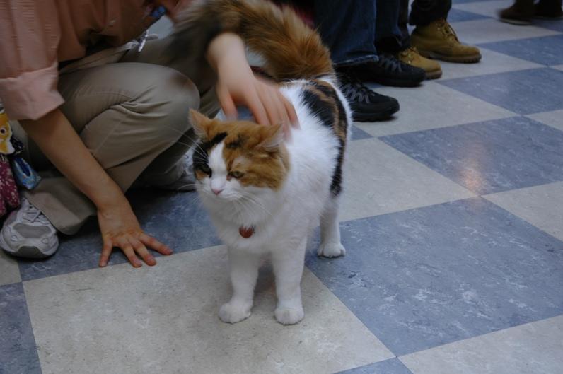 Правильное обращение с котом. Фото