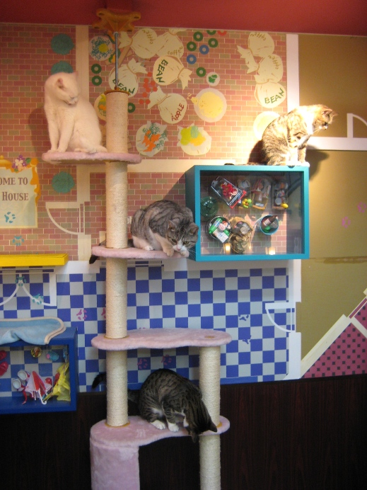 Подставка для котов в Некобукуро. Фото