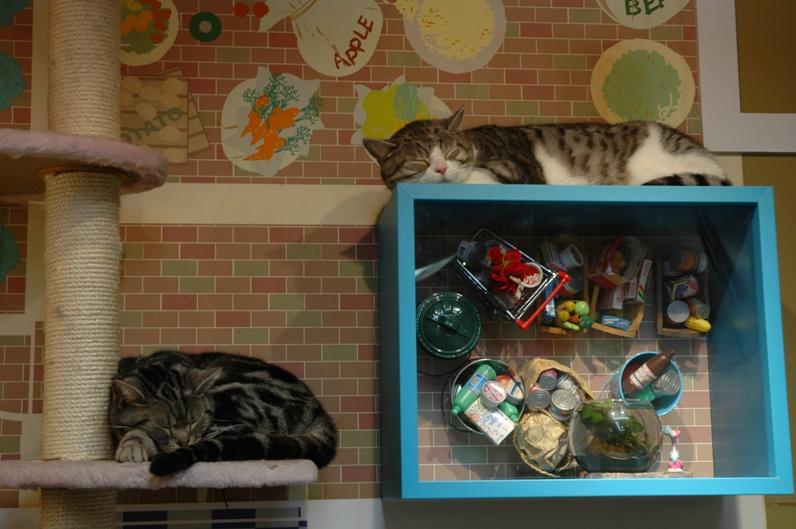 Коты Некобукуро на отдыхе. Фото