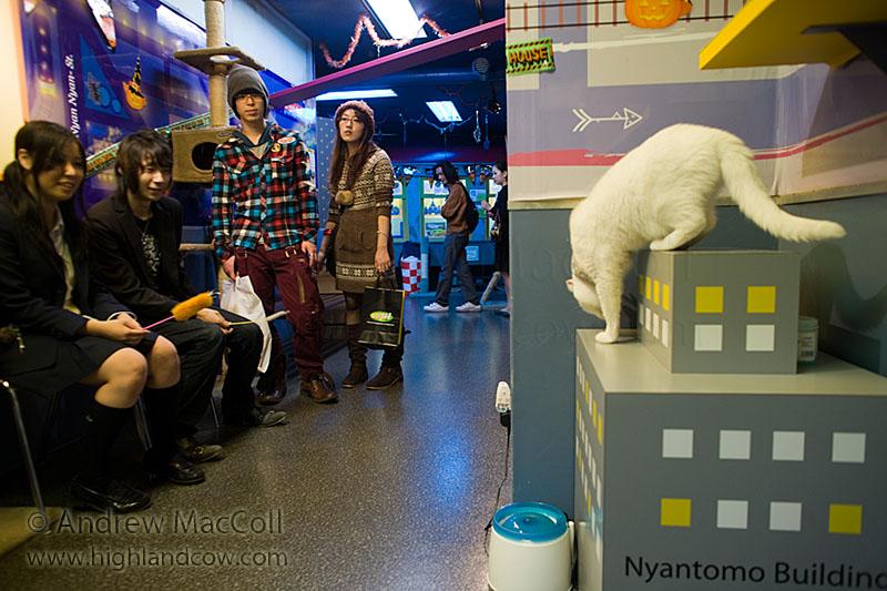 Посетители Некобукуро призывают кота. Фото
