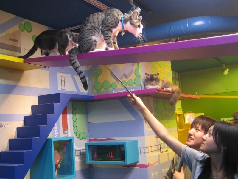 Посетители Некобукуро призывают котов. Фото