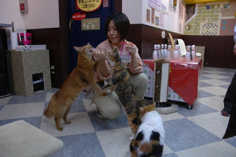 Японка подкармливает котов в Некобукуро. Фото