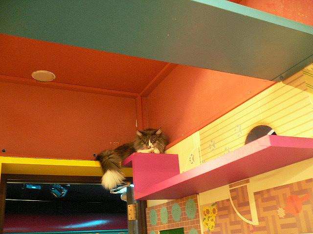 Кот взобрался на верхнюю полку в Некобукуро. Фото
