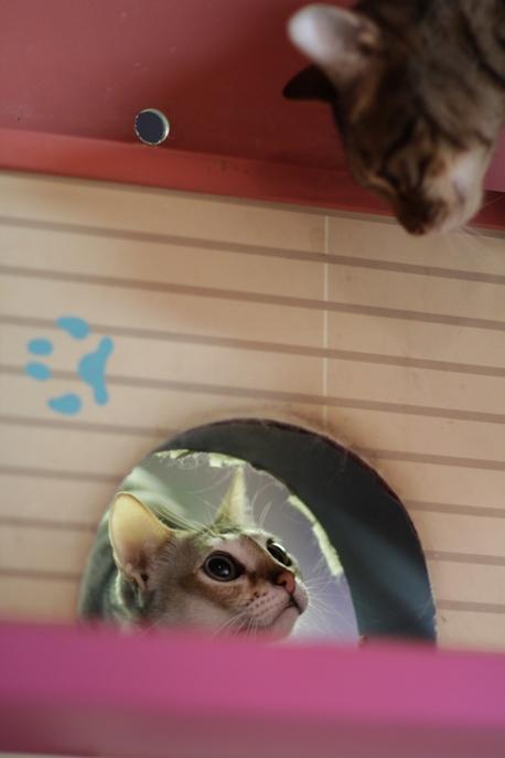 Коты общаются через лаз в стене в Некобукуро. Фото