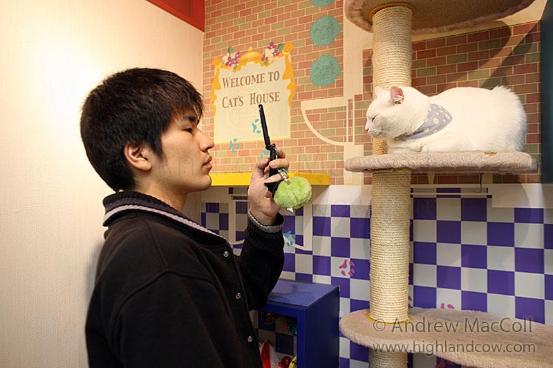 Кошка позирует японцу для памятного кадра. Фото