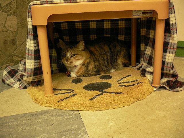 Кот в укрытии. Фото