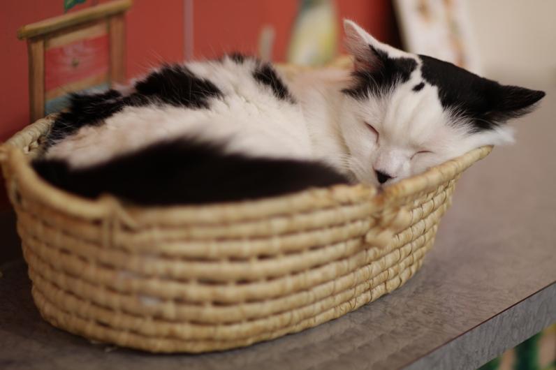 Кот спит в корзинке. Фото