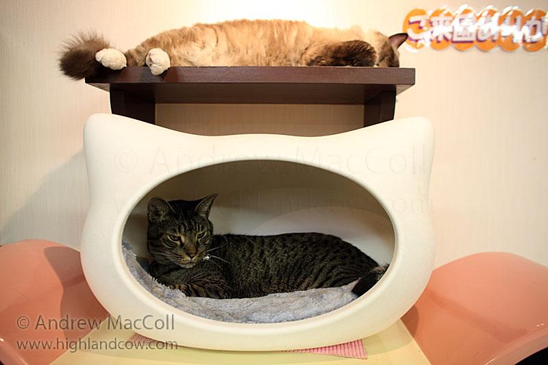 Лежанки для котов в Некобукуро. Фото