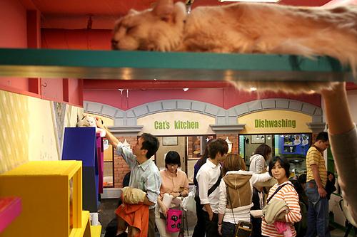 Посетители Некобукуро в поисках кошек. Фото