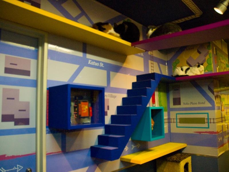 Лесенки и полки для кошек в Некобукуро. Фото