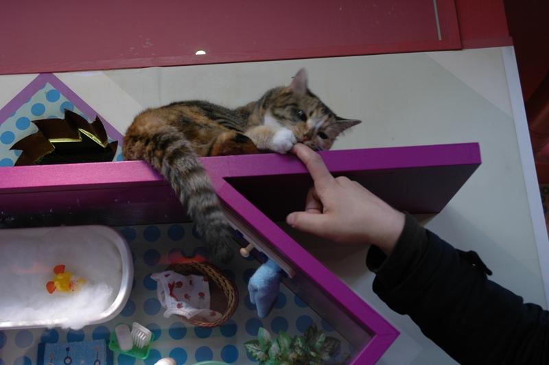 Кот кусает за палец непрошенного гостя. Фото