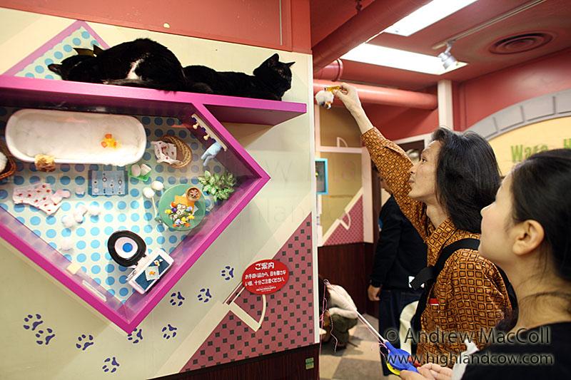Попытки развеселить медитирующего кота. Фото