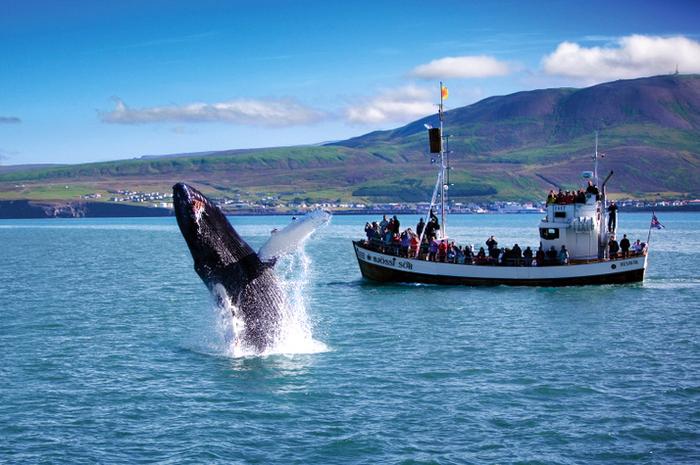 Наблюдение туристов за китами. Исландия