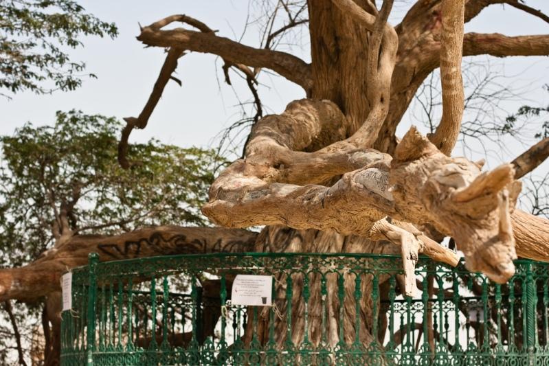 Ствол Дерева жизни. Бахрейн. Фото