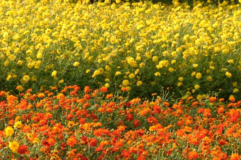 Японский парк Хитачи в сентябре. Фото