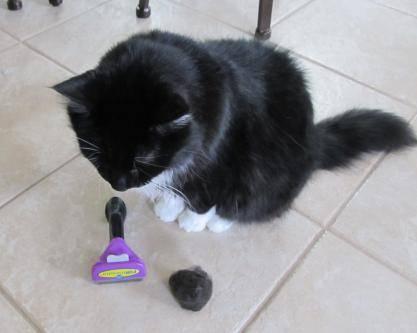 Фурминатор и кошка. Фото