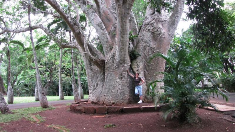Ботанический сад Памплемус на острове Маврикий. Фото