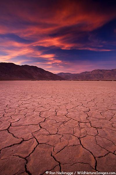 Пустыня Анза Боррего до цветения. Фото
