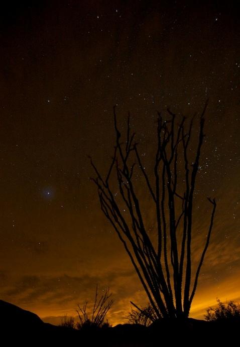Окотийо. Ночная пустыня Анза Боррего. Фото