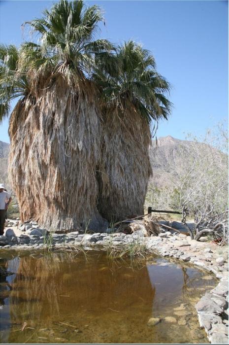 Каньон пальм в пустыне Анза Боррего. Фото