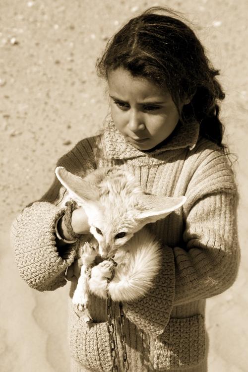 арабская девочка с фенеком на руках. Фото / fennec fox photo