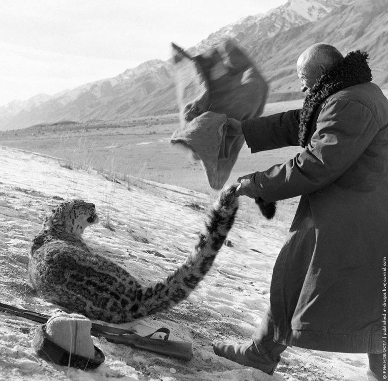Охота на снежного барса. Киргизия. 1966 год.