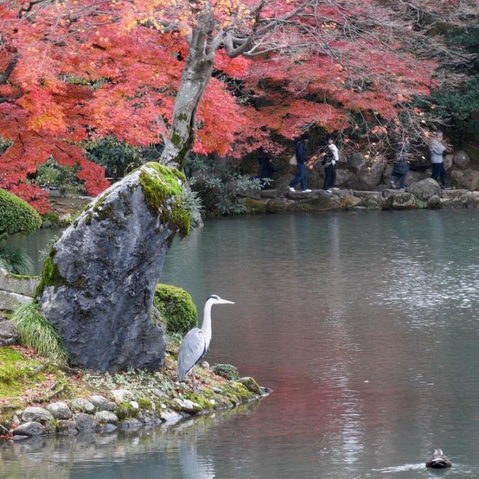Японский осенний парк Кераку-эн. Цапля у пруда. Фото