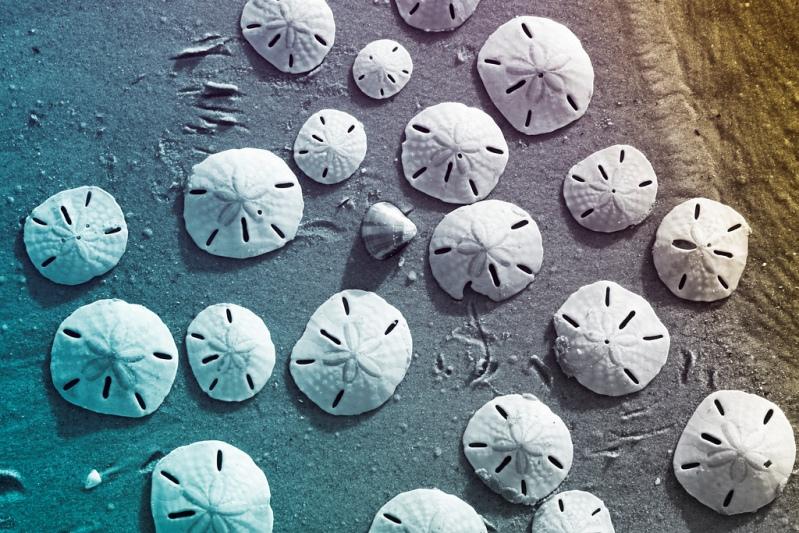 Необычные ракушки на берегу озера в Ленсойс Мараньенсес. Фото