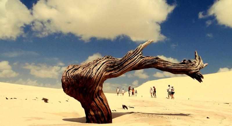 Засохшее дерево в пустыне Ленсойс Мараньенсес. Фото