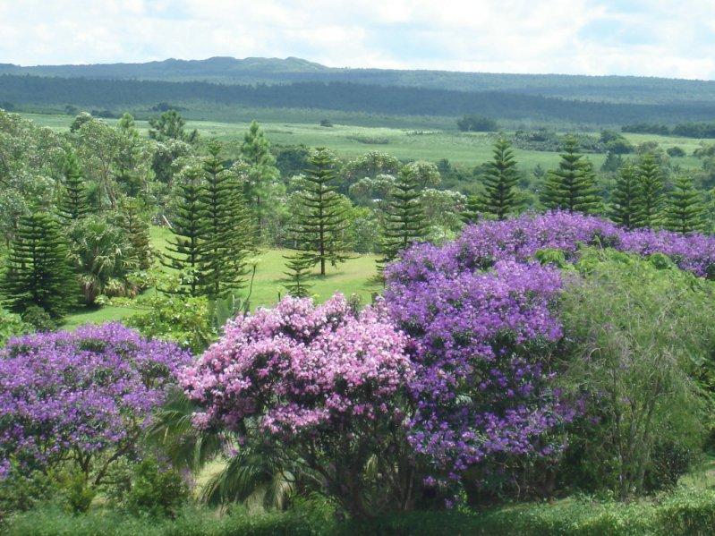Пейзажи Маврикия. Саван.
