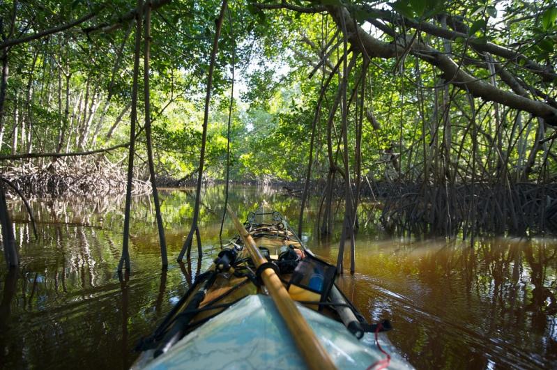 Каноэ в национальном парке Эверглейдс (Флорида, США). Фото