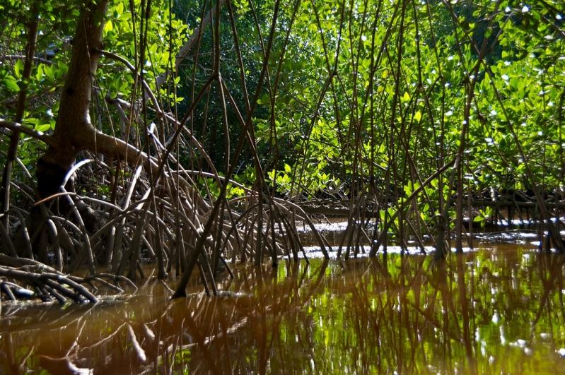Национальный парк Эверглейдс (Флорида, США). Фото