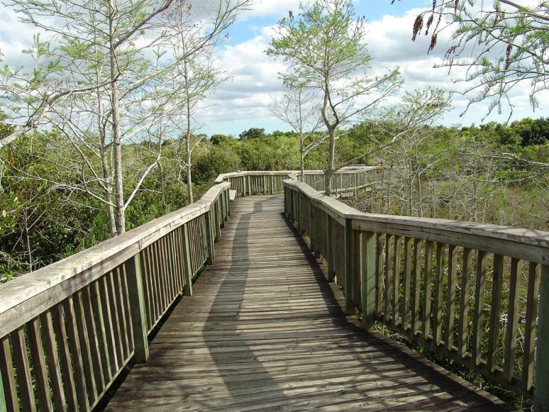 туристическая тропа в национальном парке Эверглейдс (Флорида, США). Фото