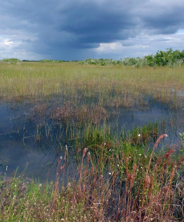 речка-трясина Шарк-Ривер, Национальный парк Эверглейдс (Флорида, США). Фото