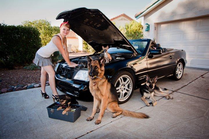 Немецкие овчарки, красивая девушка и авто. Фото