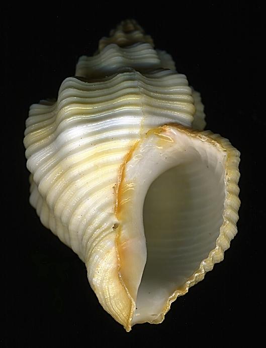 Морская раковина крупным планом. Фото