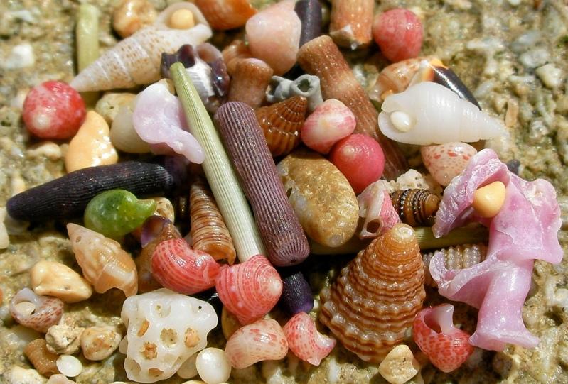 Красивые разноцветные морские камешки и ракушки. Фото