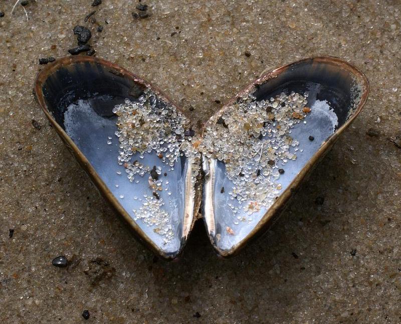 Дары моря. Фото