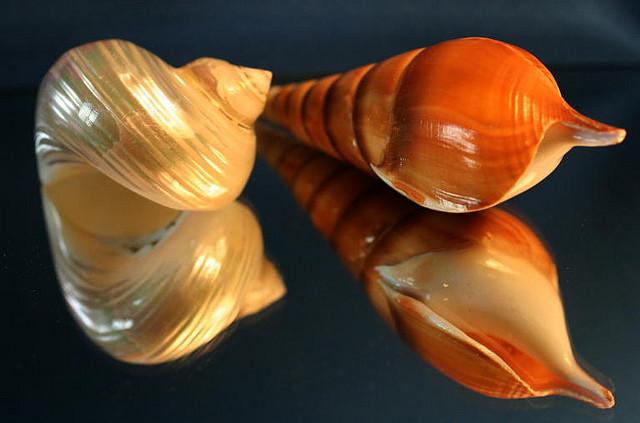 Красивые морские раковины на зеркальной поверхности. Фото