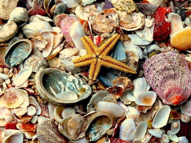 Разноцветные морские камешки и ракушки. Красивое фото