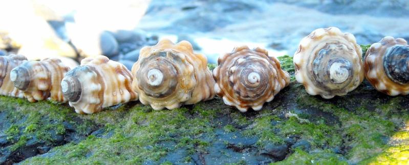 Красивые морские ракушки. Фото