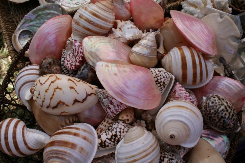 Много морских ракушек. Фото