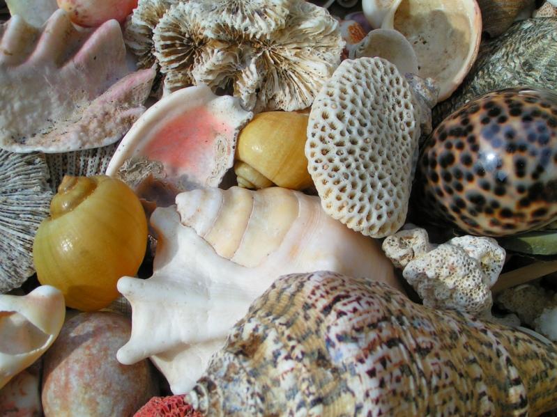 Разноцветные морские ракушки. Фото