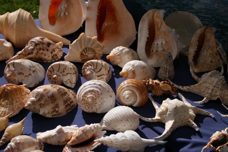 Красивый натюрморт из морских ракушек. Фото