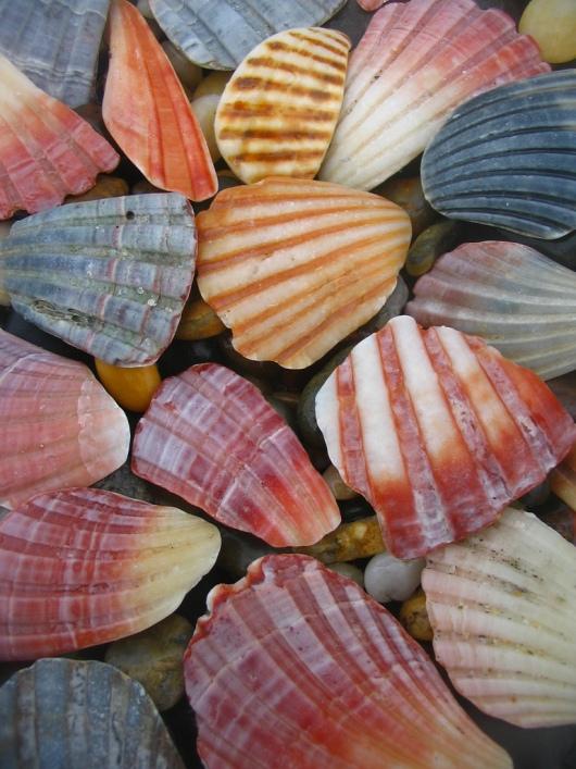 Красивые разноцветные морские ракушки. Фото