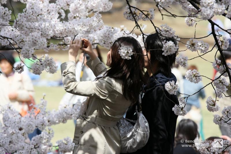 Японские девушки фотографируют цветение сакуры. Фото
