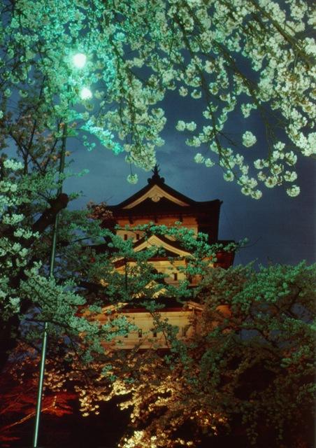 Японская сакура с ночной подсветкой на фоне пагоды. Фото