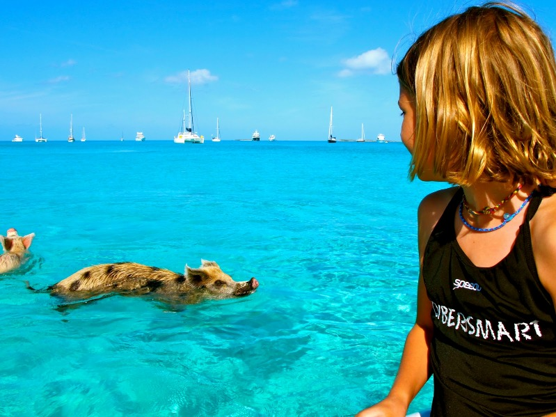 Свинья плывет около яхты. Багамы. Фото