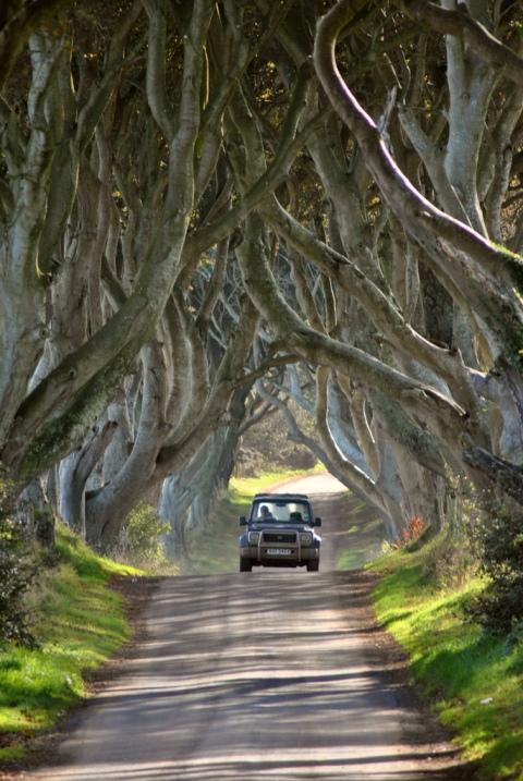 Темная аллея буков в Северной Ирландии.